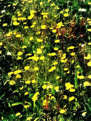Photograph - Wildflower Medley by Dorothy Berry-Lound