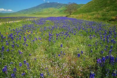 Photograph - Wildflower Mix At Tejon Ranch by Lynn Bauer