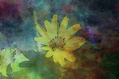 Photograph - Wildflower Oxidized 5772 Idp_2 by Steven Ward