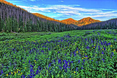 Art Print featuring the photograph Wildflower Park by Scott Mahon