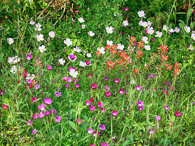 Photograph - Wildflower Patch by Charles McKelroy