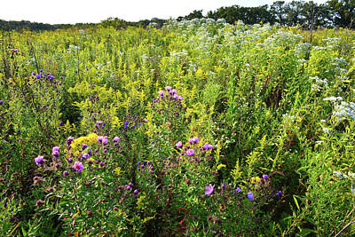 Photograph - Wildflower Prairie In Pleasant Valley by Ray Mathis