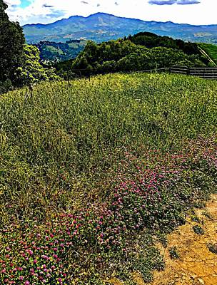 Photograph - Wildflower Ridge by Cadence Spalding
