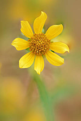 Photograph - Wildflower by Robert Charity
