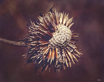 Photograph - Wildflower Seed Pod by Anna Louise
