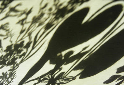 Painting - Wildflower Shadows IIi by Dawn Senior-Trask