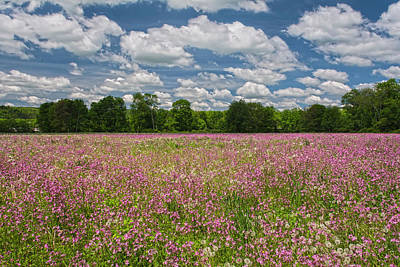 Photograph - Wildflower Skies by Angelo Marcialis
