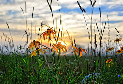 Photograph - Wildflower Sunrise by Bernadette Chiaramonte