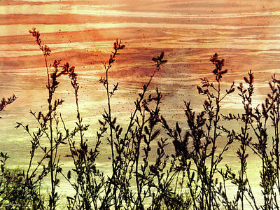 Digital Art - Wildflower Sunrise by Shawna Rowe