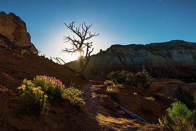 Photograph - Wildflower Sunset Kodachrome State Park Utah by Lawrence S Richardson Jr