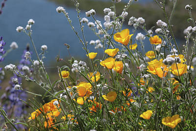 Photograph - Wildflower Super Bloom At Diamond Valley Lake by Cliff Wassmann