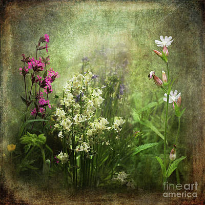 Photograph - Wildflower Symphony by Liz Alderdice