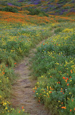 Art Print featuring the photograph Wildflower Trail At Diamond Lake In California by Jetson Nguyen