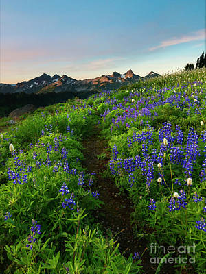 Photograph - Wildflower Trail by Mike Dawson