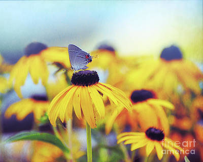 Photograph - Wildflower Visitor by Kerri Farley