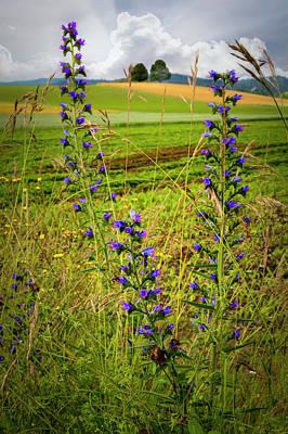 Photograph - Wildflower Wandering by Debra and Dave Vanderlaan