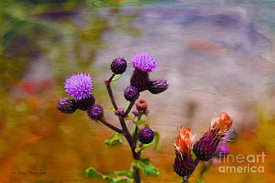Photograph - Wildflower Watercolour by Nina Silver