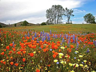California Poppies Photograph - Wildflower Wonderland 5 by Lynn Bauer