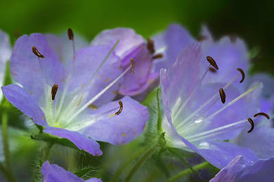 Photograph - Wildflower Workshop_may072016_0037 by Brian Snyder