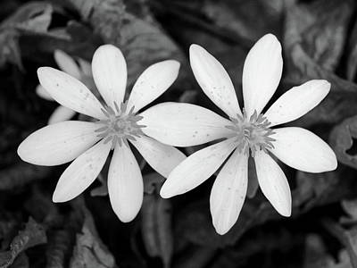 Photograph - Wildflower...black And White by Tom Druin