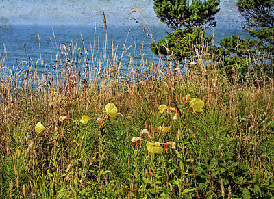 Photograph - Wildflowers Above The Sea by Thom Zehrfeld