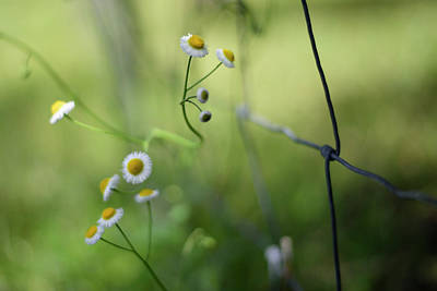 Photograph - Wildflowers Along A Country Road by Laura Fasulo