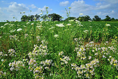 Photograph - Wildflowers Along Country Road In Mchenry County by Ray Mathis