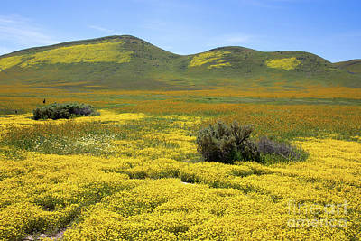 Photograph - Wildflowers Along Soda Lake Road by Mimi Ditchie