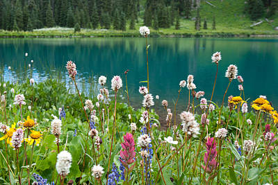 Photograph - Wildflowers Along The Lake by Cascade Colors