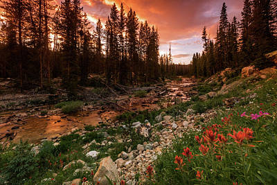 Photograph - Wildflowers Along The Provo River. by Johnny Adolphson