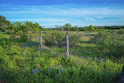 Photograph - Wildflowers Along The Roadside by Lynn Bauer