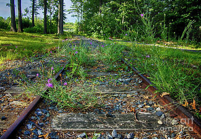 Photograph - Wildflowers Along The Tracks by Mark Miller