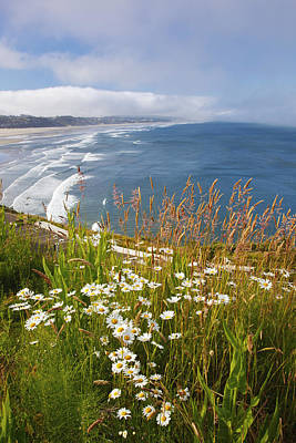 Photograph - Wildflowers Along Yaquina Head Newport by Craig Tuttle