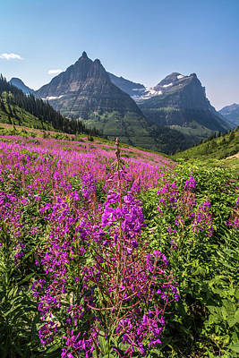 Photograph - Wildflowers And A Glacier by Peter Tellone