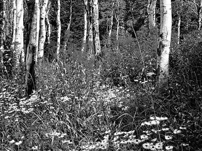 Photograph - Wildflowers And Aspens Bw by David King