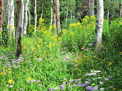 Photograph - Wildflowers And Aspens by David King