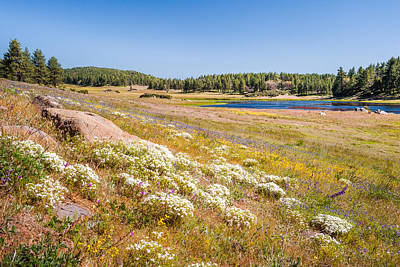 Photograph - Wildflowers And Big Laguna by Alexander Kunz