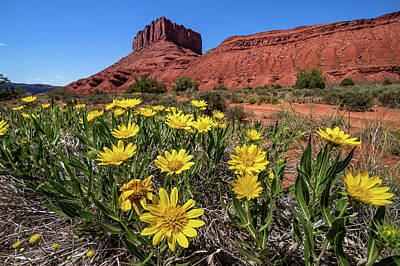Photograph - Wildflowers And Butte by Peter Tellone