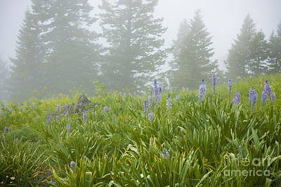 Photograph - Wildflowers And Fog by Idaho Scenic Images Linda Lantzy