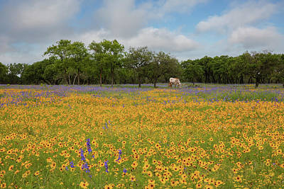 Studio Grafika Science - Wildflowers and Longhorns in the Texas Hill Country 1 by Rob Greebon