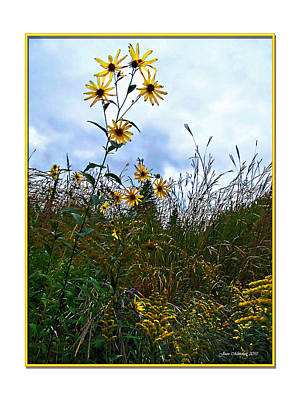 Photograph - Wildflowers And Mentor Marsh by Joan  Minchak