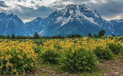 Photograph - Wildflowers And Mount Moran by Yeates Photography