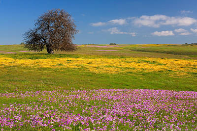 Wildflowers And Oak Tree - Spring In Central California Art Print by Ram Vasudev