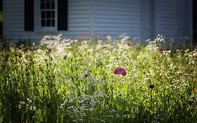 Photograph - Wildflowers And Pink Poppy Sunshine by Terry DeLuco