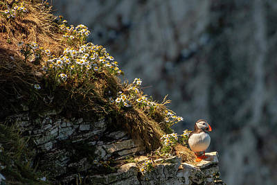 Photograph - Wildflowers And Puffin  by Cliff Norton