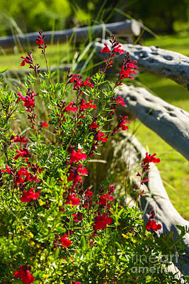 Wildflowers And Rail Fence Art Print