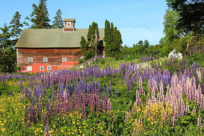 Art Print featuring the photograph Wildflowers And Red Barn by Roupen  Baker