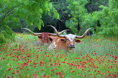Wildflowers In Texas Photograph - Wildflowers And Texas Longhorns 1 by Rob Greebon