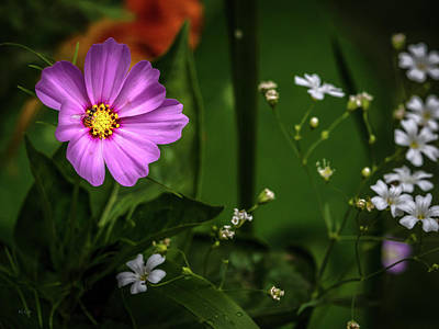 Photograph - Wildflowers And The Bee by Bob Orsillo