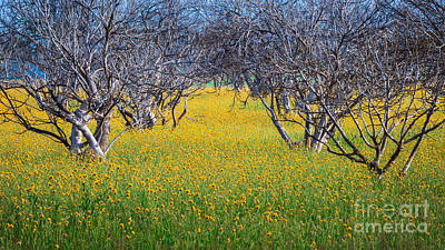 Photograph - Wildflowers by Anthony Bonafede